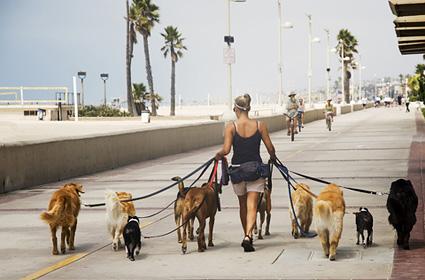 45-dog-walker-leash-DT-425km071411