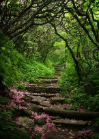 flowerpetals,forest,path,stairs,trees,green-ccf952968c256b488e75bb6d58ba1269_h