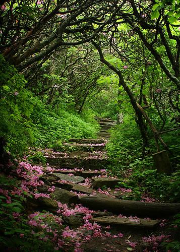 flowerpetals,forest,path,stairs,trees,green-ccf952968c256b488e75bb6d58ba1269_h